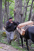 Chile, Patagonia, Torres del Paine National Park, circuit trek, near Lago Dickson. Trail reapairs, workers with horses and wood.