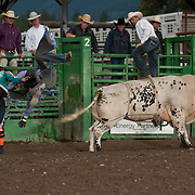 David Graham attempts to ride Red Eye Rodeos Drs Orders in the long round at the 2016 Darby MT EPB  Josh Homer photo.  Photo credit must be given on all uses.