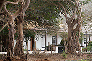 """Know as """"the flower island"""" Brava  has in its capital village Nova Sintra a gem of simple colonial architecture and its streets are arborized with many kinds of trees like these fig trees."""