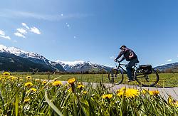 THEMENBILD - Blick auf den Kitzsteinhorn Gletscher, im Vordergrund eine Wiese mit Löwenzahn Blumen und eine Radfahrer, aufgenommen am 30. April 2016 in Zell am See, Oesterreich // View of the Kitzsteinhorn Glacier, in the foreground a meadow with dandelion flowers and a cyclist, on 2016/04/30 in Zell am See, Austria. EXPA Pictures © 2016, PhotoCredit: EXPA/ JFK