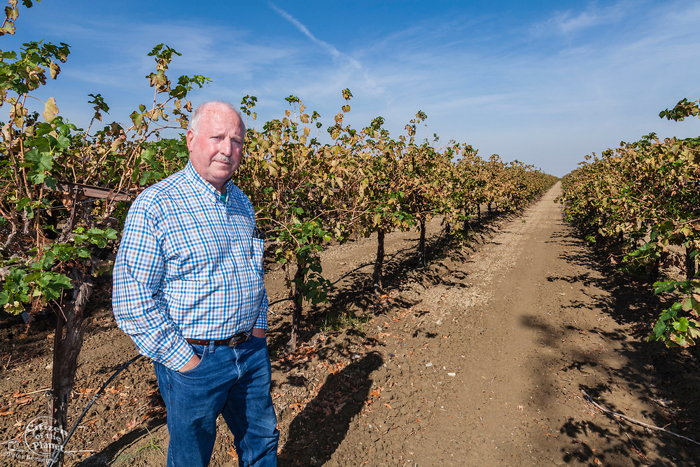 Rod Cardella standing in his vinyard which uses drip irrigation. Rod Cardella runs Cardella Winery, a family business since 1969, which grows almonds, broccoli and other crops as well as grapes. With the high price of water in recent years, Rod has turned to technology and drip irrigation to lower water usage and like many other farmers is planting high value crops such as almonds. Fresno County, San Joaquin Valley, California, USA