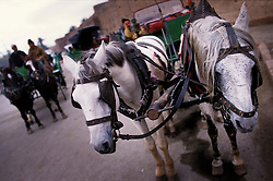 Caleche horses, Marrakech, Morocco.