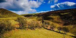 North Wales landscape near Llangwyfan<br /> <br /> (c) Andrew Wilson   Edinburgh Elite media