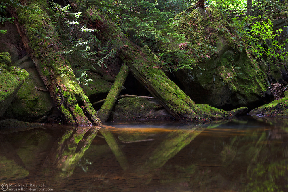 Fallen trees are reflected in the Chase River below one of the bridges at Colliery Dam Park in Nanaimo, British Columbia, Canada