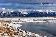 Whitetail deer and Wetlands pond in winter at Ninepipe WMA near Ronan, Montana, USA