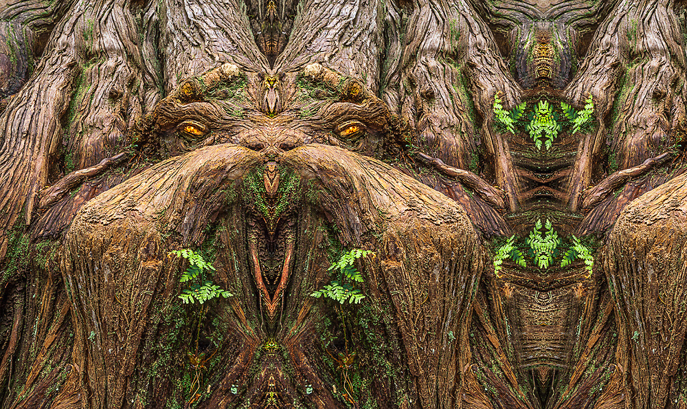 """""""Walrus of Sorts"""", derivative image created from a photo of a western red cedar (Thuja plicata) and fern, old growth temperate rain forest, Olympic National Park, WA, USA"""
