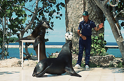 Trained sea Lion balancing ball on its nose and another perched on stand; with trainer; near Guardalavaca; Holguin; Cuba,