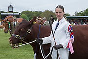 A female farmer with her prize winning cow during the Grand Parade of the Suffolk Show on the 29th May 2019 in Ipswich in the United Kingdom. The Suffolk Show is an annual show that takes place in Trinity Park, Ipswich in the English county of Suffolk. It is organised by the Suffolk Agricultural Association.