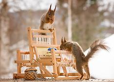 Squirrel Fashion - 15 Aug 2018