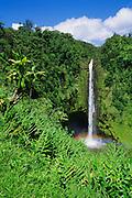 Lush vegetation framing Akaka Falls, Akaka Falls State Park, Hamakua Coast, The Big Island, Hawaii USA
