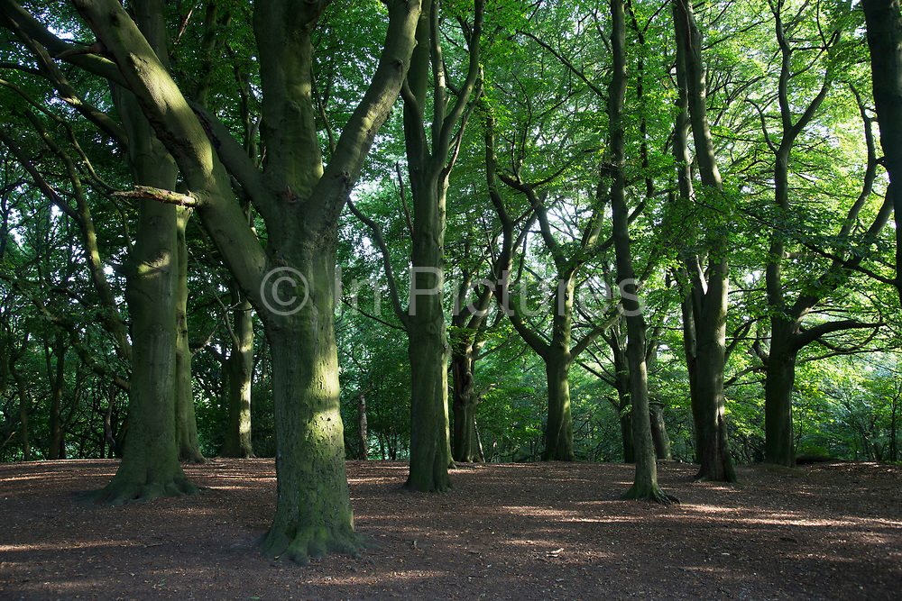"""Hampstead Heath (locally known as """"the Heath"""") is a large, ancient London park, covering 320 hectares (790acres). This grassy public space is one of the highest points in London, running from Hampstead to Highgate. The Heath is rambling and hilly, embracing ponds, recent and ancient woodlands."""
