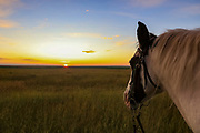 Angel the horse watches the rising sun during a Montana sharptailed grouse hunt.