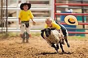 Mutton Busting. Bastrop Yesterfest Rodeo, Bastrop, Texas, April 27, 2014. ©2014 Darren Carroll.