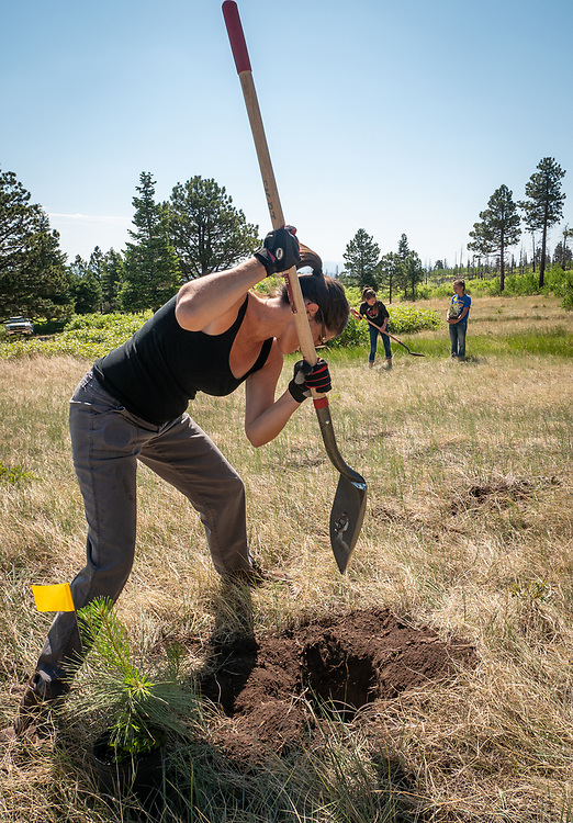 Scout and 4H volunteers from the San Isabel Land Protection Trust help the Huber family restore the forest on their ranch, following the 2011 Duckett Creek fire.