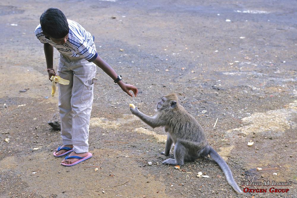 Boy Feeding Baboon A Banana