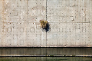 Plant growing out of wall along Los Angeles River, Downtown Los Angeles, California, USA