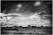 Seagulls at Dungeness