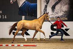 005, Super Star van't Keikelhof<br /> BWP Hengstenkeuring 2021<br /> © Hippo Foto - Dirk Caremans<br />  11/01/2021