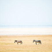 Two zenbras walk by the semi-dry salt lake at Lake Manyara National Park in northern Tanzania.