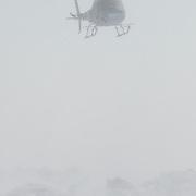 Dr. Steve Amstrup, USGS biologist, and chopper pilot Doc Gohmert hover over a polar bear (Ursus maritimus) recently darted with immobilizing drugs. Beaufort Sea ice pack, Kaktovik, Alaska