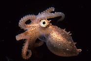 Eels, Octopus, Squid
