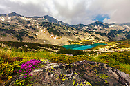 Pink thyme and emerald lake