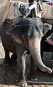 Tourist elephant mahout at the Amber Fort - Rajasthan Jaipur - India 2011