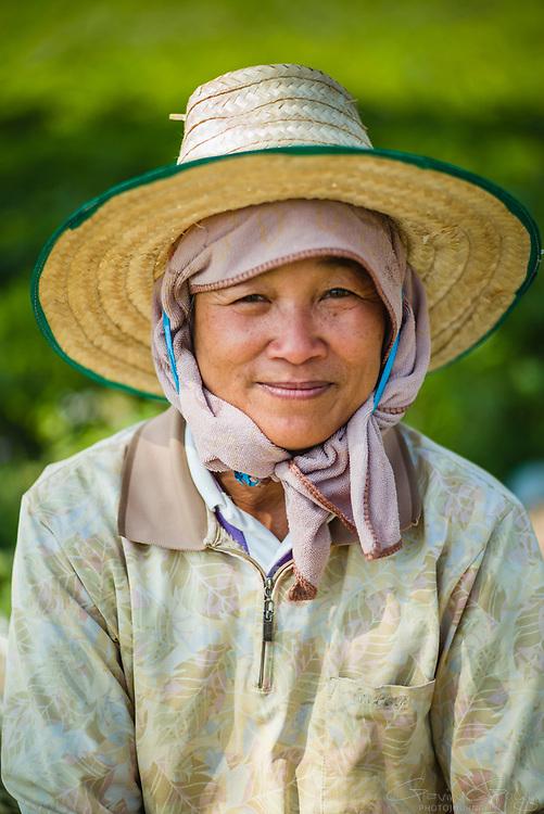 A farm worker takes a break from harvesting indigo plants, Indigo Plantation Fields, Sakhon Nokhon, Thailand