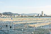 Sumaura Suisan farms in the Suma area of Kobe