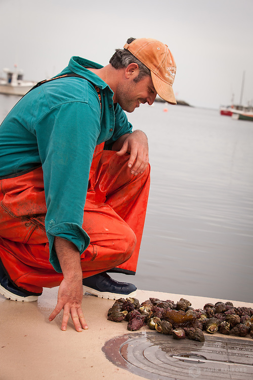 Lobsterman Keper Connell with the whelks collected from a recent lobstering trip.