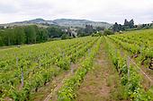 Bourgogne Beaujolais Domaine Vissoux Chermette - stock photo samples