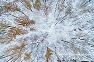 63877-00810 Trees with a dusting of snow aerial view Marion Co. IL