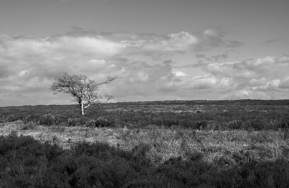 Tree on the Peak District, Derbyshire.