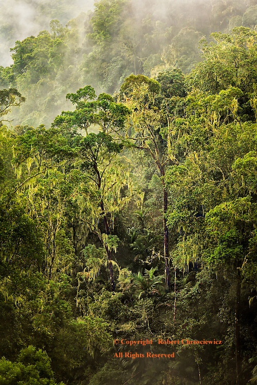 Jungle Mist: A heavy mist rolls through the heavily forested volcanic island of Lombok, Indonesia.