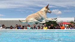 18.06.2011, Messehalle, Erfurt, GER, 4. Nationale und 9. Internationale Rassehunde Ausstellung, im Bild Dog Diving - Labrador Ben springt ins Wasser. EXPA Pictures © 2011, PhotoCredit: EXPA/ nph/ Hessland  ****** out of GER / SWE / CRO  / BEL ******