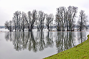 Nederland, Nijmegen, 12-1-2018 Het hoogwater, hoge water, trekt nieuwsgierigen en andere dagjesmensen naar de Ooijpolder en levert schilderachtige beelden op. Foto: Flip Franssen