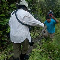 Indian guides help adventurous hikers cross logs through swamps near the Yanayacu River in Peru's Amazon Jungle.