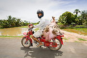 26 JUNE 2006 - CENTRAL CAMBODIA: Life on Highway 6 between Phnom Penh and Siem Reap, Cambodia. PHOTO BY JACK KURTZ