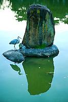 Saga-Ike Pond, Nara