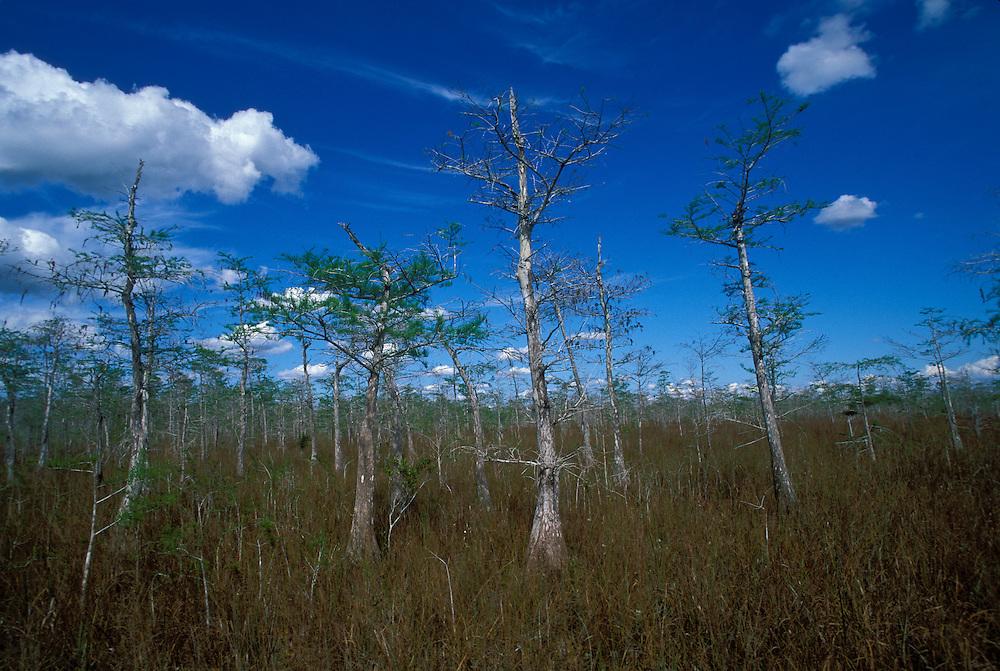 Florida Trail, Big Cypress National Preserve, Florida