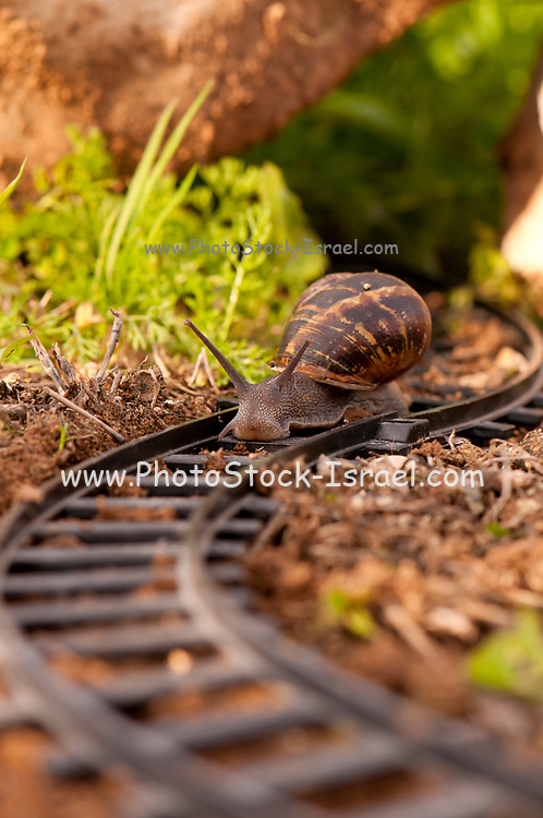 Snail on toy train tracks