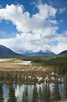 Wetlands at Saskatchewan Crossing, Banff National Park Alberta