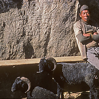 A lowland Nepali farmer relaxes with sheep he is trying to sell at the Saturday market in Namche Bazar, leading town of the Sherpas in Nepal.