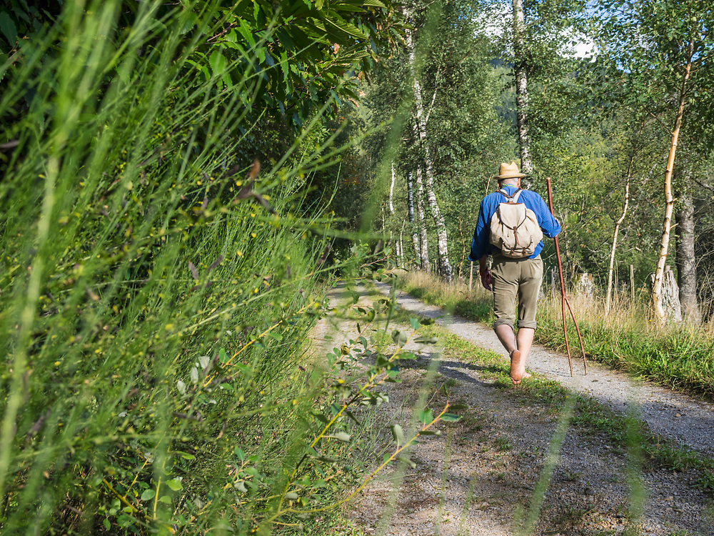 Rear view of senior man walking in Middle Black Forest, Baden-Wuerttemberg, Germany