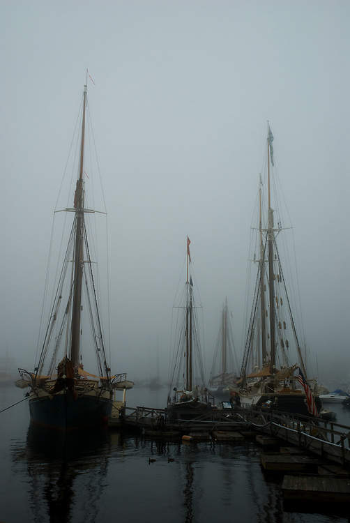A couple of ducks glide past the schooners Angelique, Mary Day and Surprise in thick fog at Camden, Maine. Several other schooners are visible in the mist.