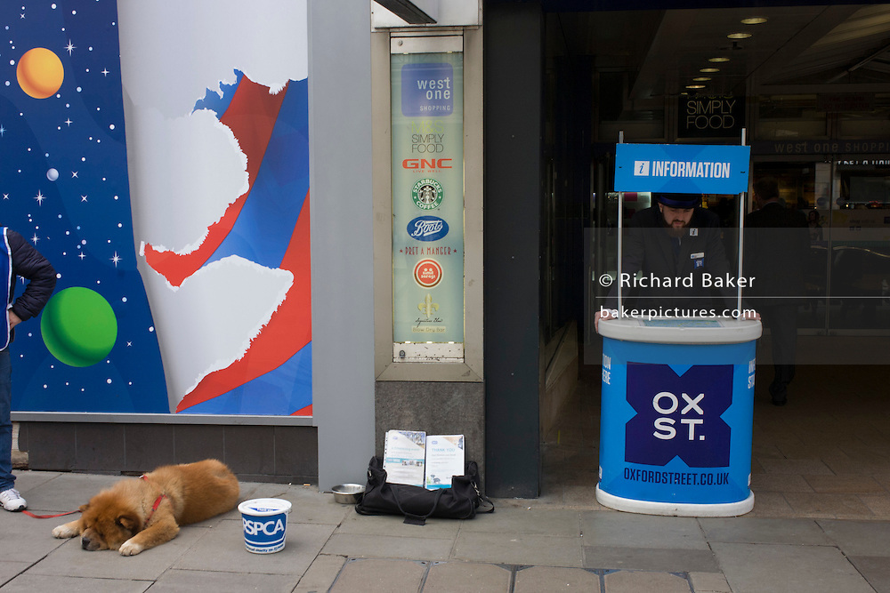 Oxford Street information point and resting RSPCA dog.