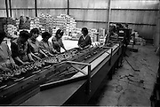 03/07/1963<br /> 07/03/1963<br /> 03 July 1963<br /> Views of tomato farm at Rush and Kinsealy, Co. Dublin. Image shows machine grading tomatoes at Harp Fruit Mart, Rush Co. Dublin.