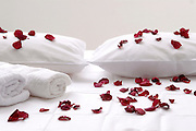 Rose petals spread on the white bed sheets for a romantic and relaxing atmosphere
