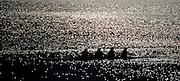 Varese,  ITALY. 2012 FISA European Championships, Lake Varese Regatta Course.  ..General Views of the Lake Varese Rowing Course.17:20:16  Thursday  13/09/2012 ..Sunrise, Sunsets, Silhouette...[Mandatory Credit Peter Spurrier:  Intersport Images]  ..2012 European Rowing Championships Rowing, European,  2012 010640.jpg.....