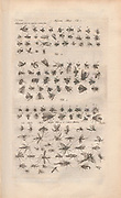 Copperplate print flying insects from Johannes Jonston book of nature 'Dr. I. Ionstons Beschrijving vande natuur der vogelen neffens haer beeldenissen in koper gesneden' Published in Amsterdam in 1660